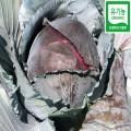 적양배추 3.5kg(3~4통)